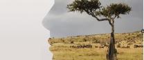 Rhodesian Bush / Zimbabwe Savannah